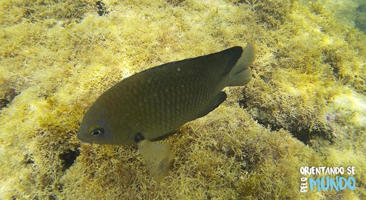 snokel-porto-de-galinhas-peixes-2