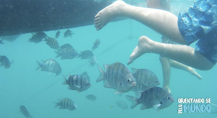 snokel-porto-de-galinhas-peixes